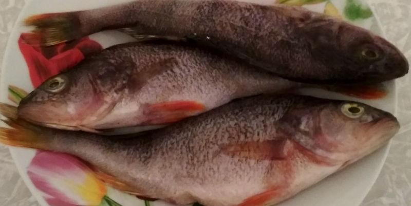 рыба к мамаляге фото